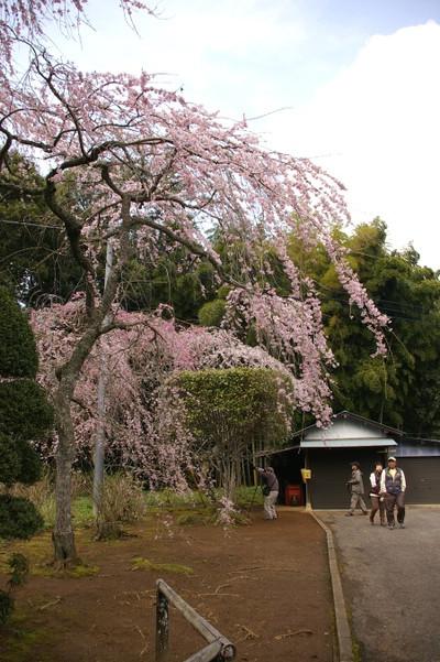 Blogtyoukouji2120406