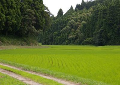 Blogtanbofuukei120701