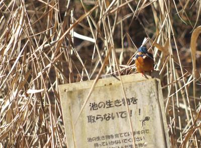 Blogkawasemi170123